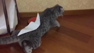 Что будет если на кота наклеить скотч?  Или как мы сломали кошку