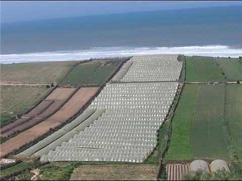 Présentation de l'Agriculture dans de la région de Casablanca-Settat, Maroc