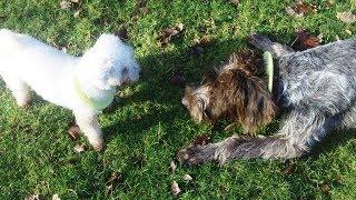 PLEASE PRESS LIKE. http://www.dogtrainers.co.uk http://www.a&bdogs....