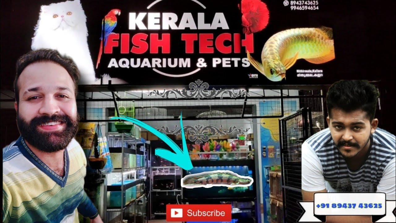 Vlog ചെയ്യാൻ ഷോപ്പിൽ കേറിയപ്പോ കണ്ടതെല്ലാം അടിപൊളി മീനുകൾ  Kerala Fish Tech Aquariums Legendary Fins