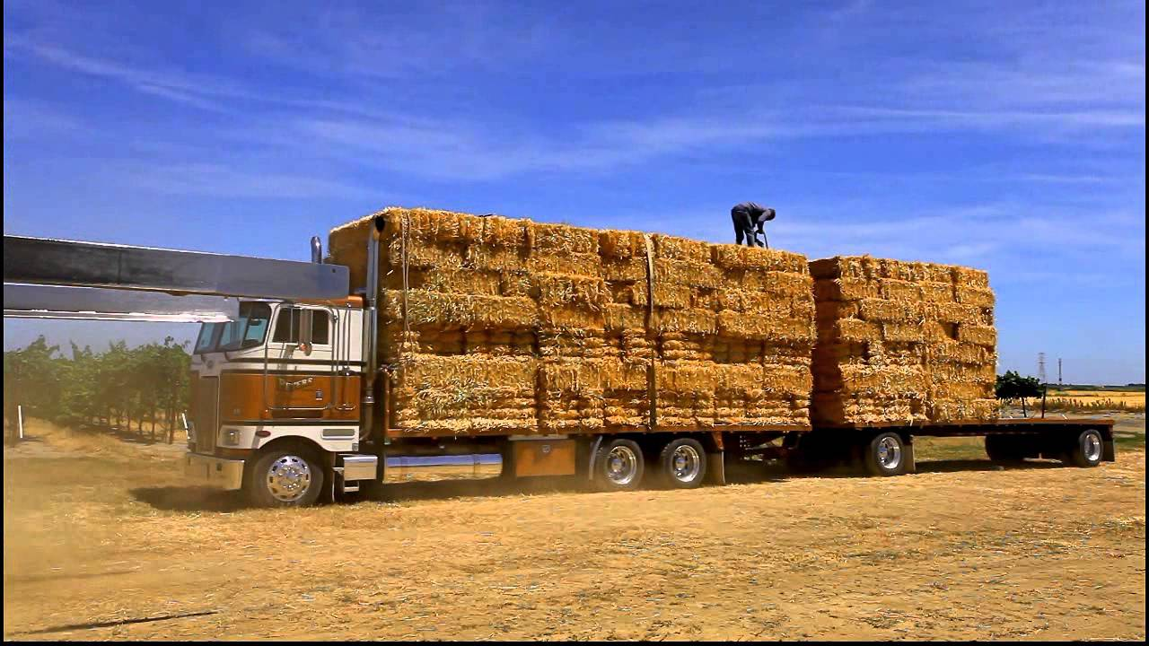 Semi Truck Seats >> Peterbilt 362 Hay Hauler - YouTube