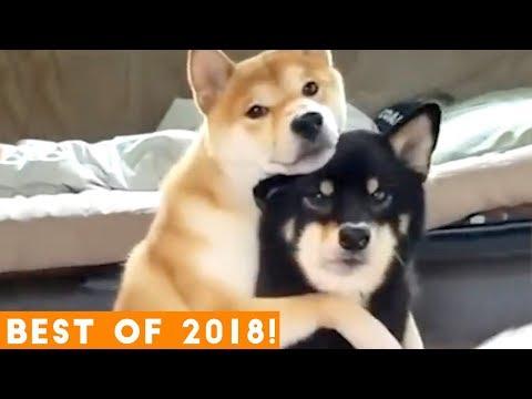 BEST ANIMALS OF 2018 Pt. 1 | Funny Pet Videos