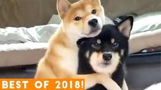 BEST ANIMALS OF 2018 Pt. 1  | Funny Pet Videos