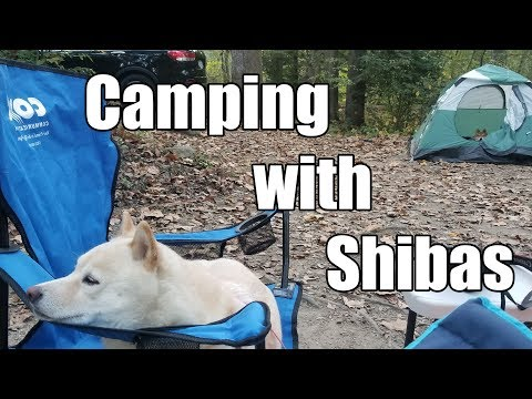 Camping with Shibas: DCSIR Wellness Group