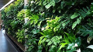 Trent University Bata Library Greenwall - Greenroofs.com Featured Project