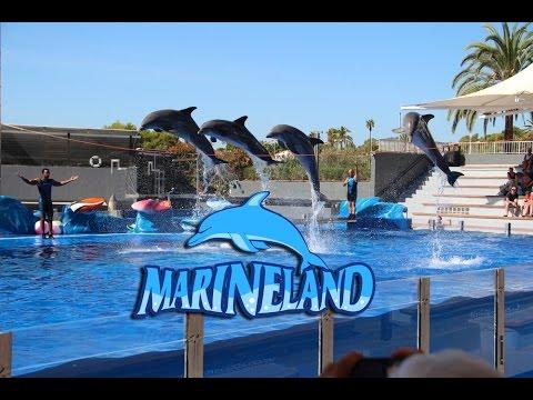 One day in Marineland Mallorca 2014