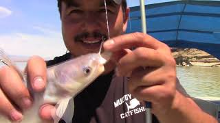Fishing For Catfish With Lures/ Catching Catfish On Artificial Baits