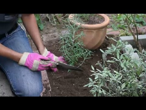 How To Design A Perennial Herb Garden : Herb Garden Tips