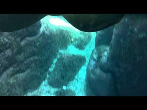 Buceando con Lobos - Isla Partida, Baja California