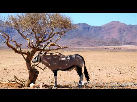 Namibia - don't miss it !