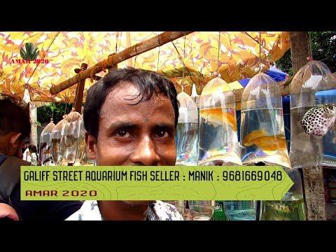AQUARIUM FISH SELLER OF GALIFF STREET PET MARKET KOLKATA INDIA   14TH JULY 2019 VISIT PART 3
