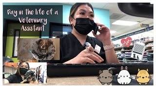 Day in the Life || Veterinary Assistant 🐶🩺🐱