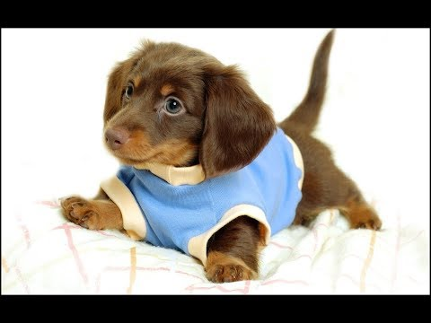 40 Fun Facts About Dogs And Puppies | Man's Best Friend