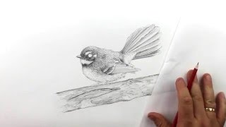 How to draw a realistic fantail. Part 13 - Drawing texture on the branch