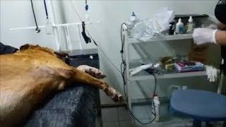 Джека повезла на переливание крови, а сделали капельницу