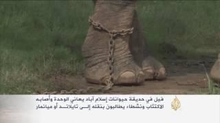 فيل بحديقة إسلام آباد يعاني الوحدة