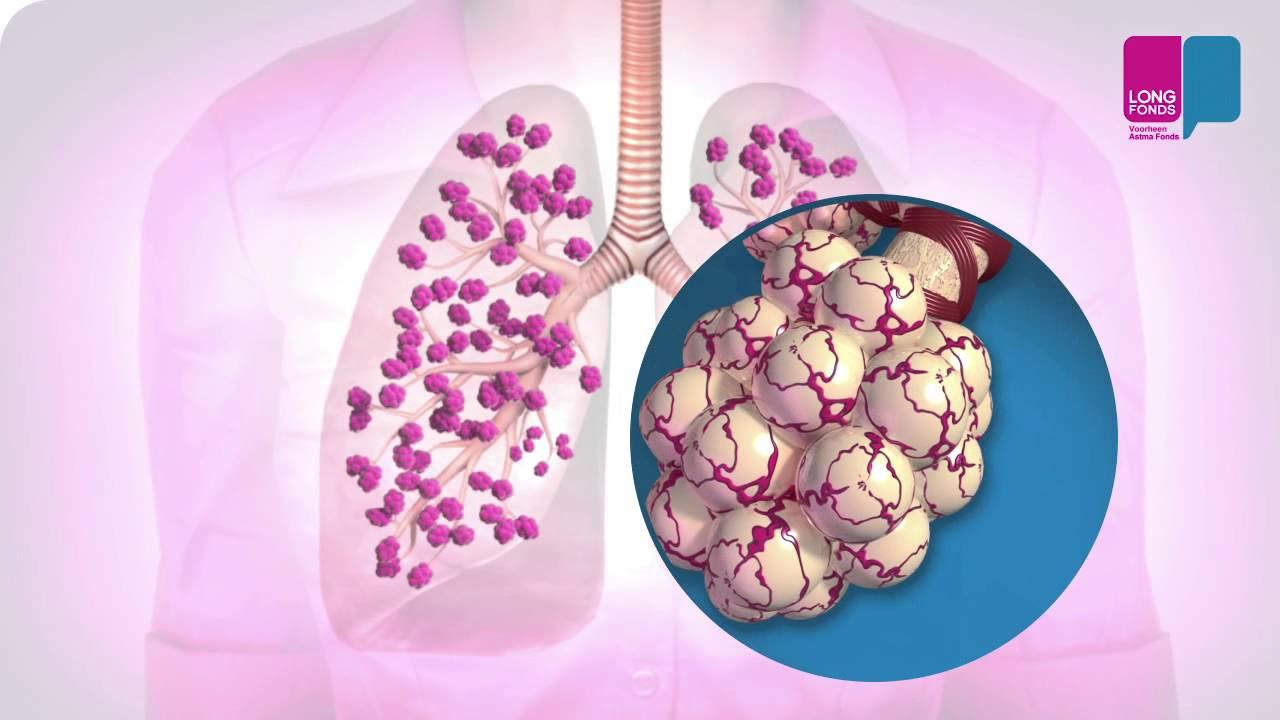 Alveoller Nedir Akciğerler Nasıl çalışır Youtube