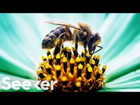 Bees' Tiny Brains Could Change How We Engineer Computers