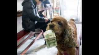 He Really Is A Clever Boy! Bobby The Cocker Spaniel Can Recognise Money