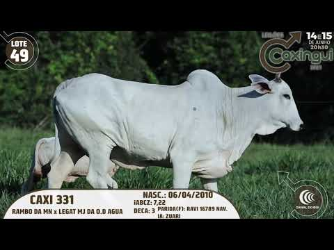 LOTE 49   CAXI 331