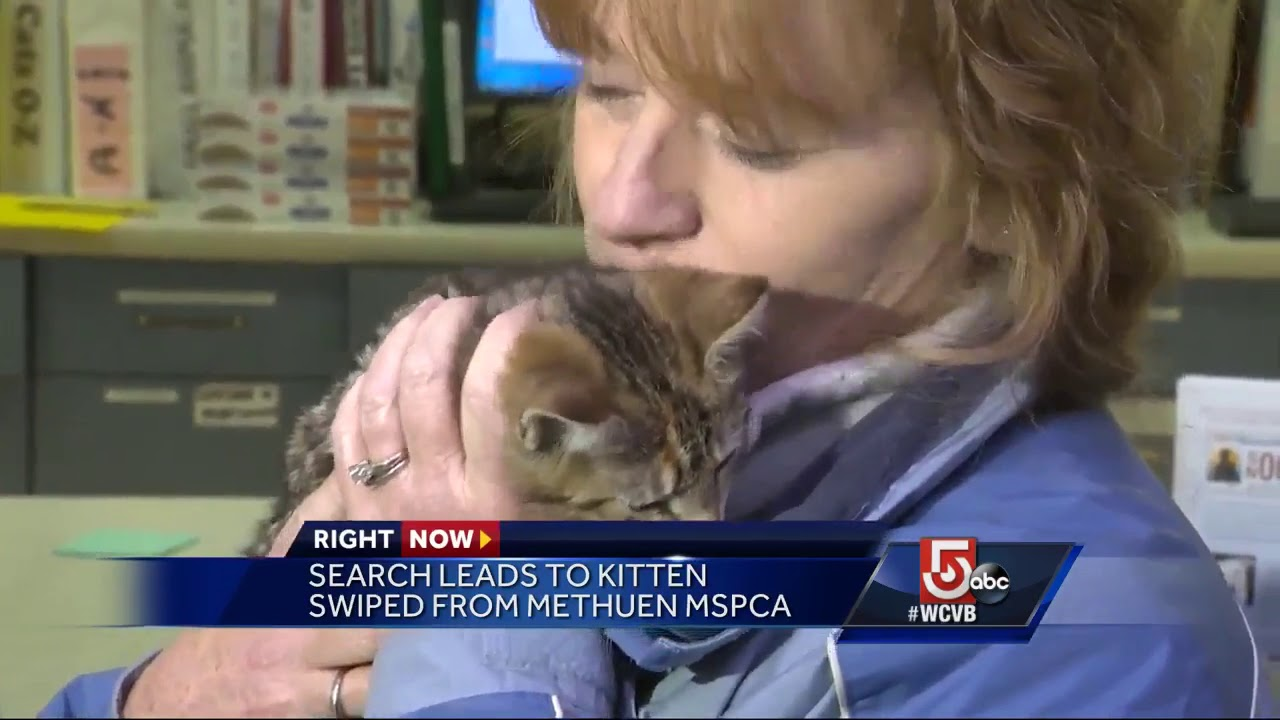 Kidnapped kitten returned to local MSPCA