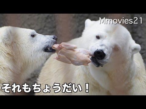 Polar Bears  eat the chicken 食いしん坊リラ 母の鶏肉も横取りー!ホッキョクグマ親子