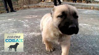 Гампр. Планета собак 🌏 Моя Планета