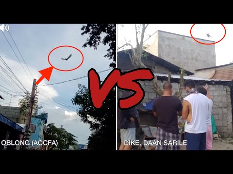 MANALO NA KAYA?? | OBLONG (ACCFA) VS CHECKERED (DAAN SARILE) |