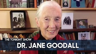 Dr. Jane Goodall on the Environmental Importance of Planting Trees (Extended) | The Tonight Show