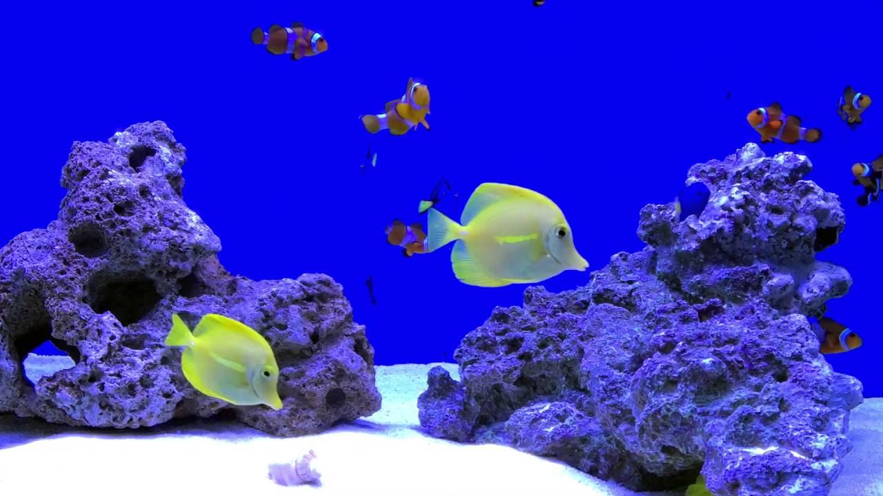 Fish aquarium in bangladesh - New Marine Tank At Fishkeepers Bd