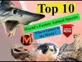 Fastest Animal Species in the World 2018 ll Highest Speed Animals on Earth