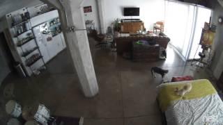 Кошка затыкает собаку