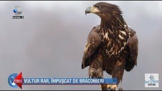 Stirile Kanal D (25.01.2020) - Vultur rar, impuscat de braconieri! Editie de pranz