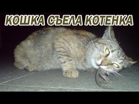 DШ#23 КОШКА СЪЕЛА КОТЕНКА!!!