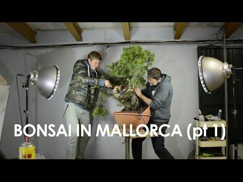 Travel Vlog - Mallorcan Bonsai (pt I)