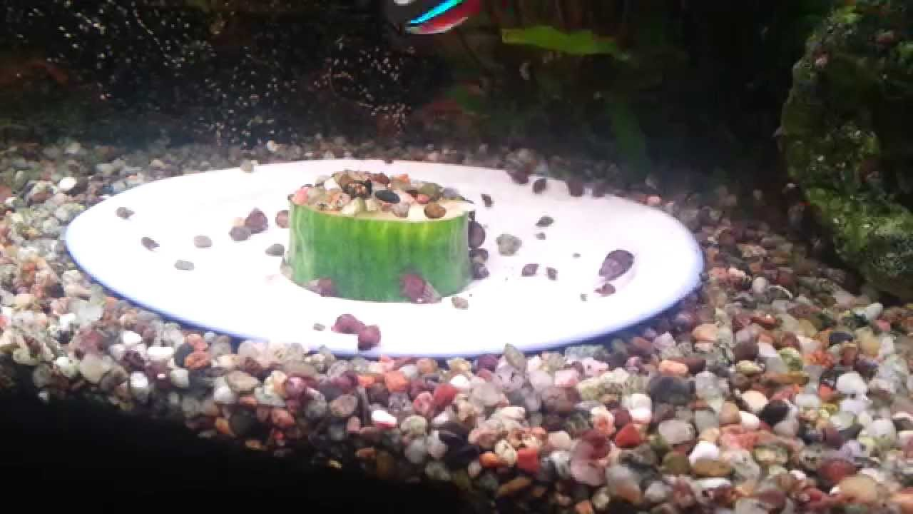 privates aquarium 120l schneckenplage teil2 youtube. Black Bedroom Furniture Sets. Home Design Ideas