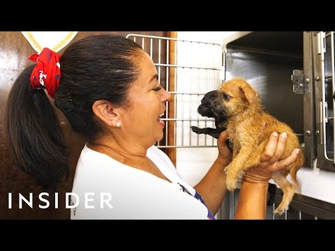 Community Access - The Sato Project, saving thousands of dogs in Puerto Rico