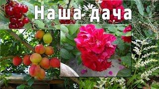 Наш огород (дача)(Наш огород (дача) http://bringingsuccess.ru/recepty.php В данном видео мы показываем, что у нас на даче делается, что растет,..., 2014-07-13T21:29:01.000Z)