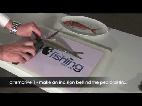 How To Fillet Fish: Australian Herring