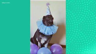 National Dress Up Your Pet Day: Viewer Photos
