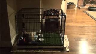 How to potty train a puppy using the Pooch Potty Trainer