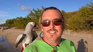 Grateful Challenge 2015 - Day 4 - Beach Walk In Trellis Bay, British Virgin Islands, Caribbean
