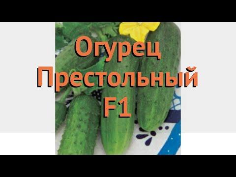 Огурец обыкновенный Престольный F1 (prestolnyy-f1) 🌿 обзор: как сажать, семена огурца Престольный F1