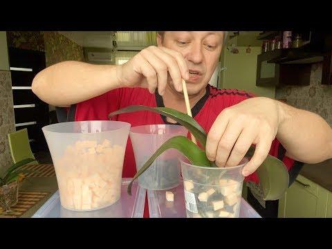 орхидея в ПИЩЕВЫХ ЛОТКАХ под КАМНЯМИ пересадка орхидеи