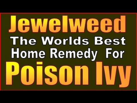 JEWEL WEED. HOW TO MAKE THE WORLDS BEST POISON IVY REMEDY