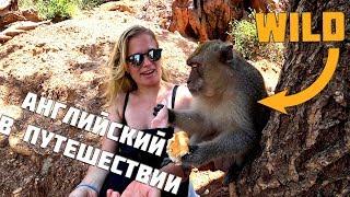 Урок английского с дикими обезьянами на острове Ко Лан. Английский для путешествий. #Marrributravel