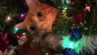 10 самых вредных котов, которые роняли елку