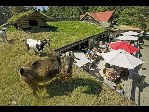 goats on roof at coombs bc canada youtube