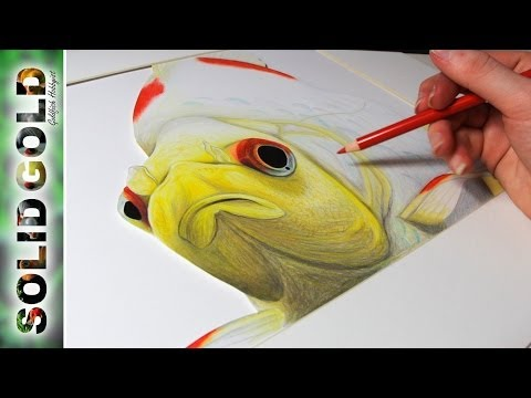 goldfish-speed-drawing-|-solid-gold-sketchbook