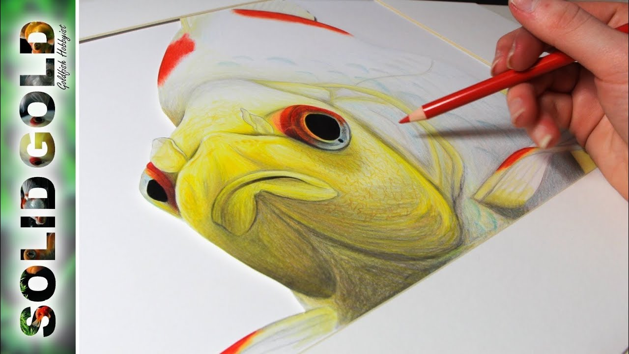 Goldfish speed drawing solid gold sketchbook youtube for Solid gold fish